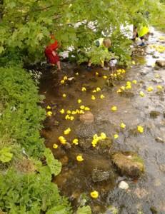 malham safari yorkshire dales pennine way kids children river activity wildlife