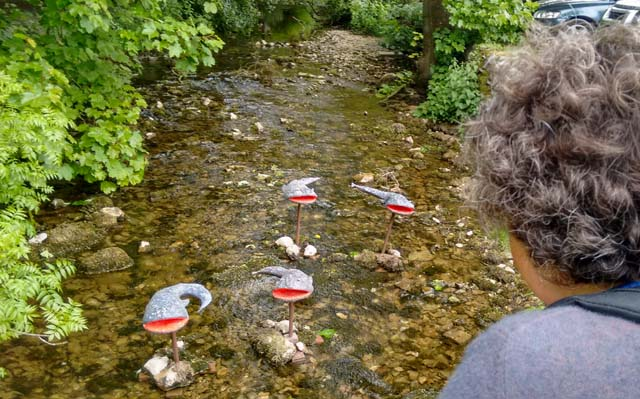 yorkshire dales beck river wildlife limestone pennine way