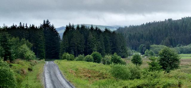 pennine way national trail england walk hike trek wood pines cheviot