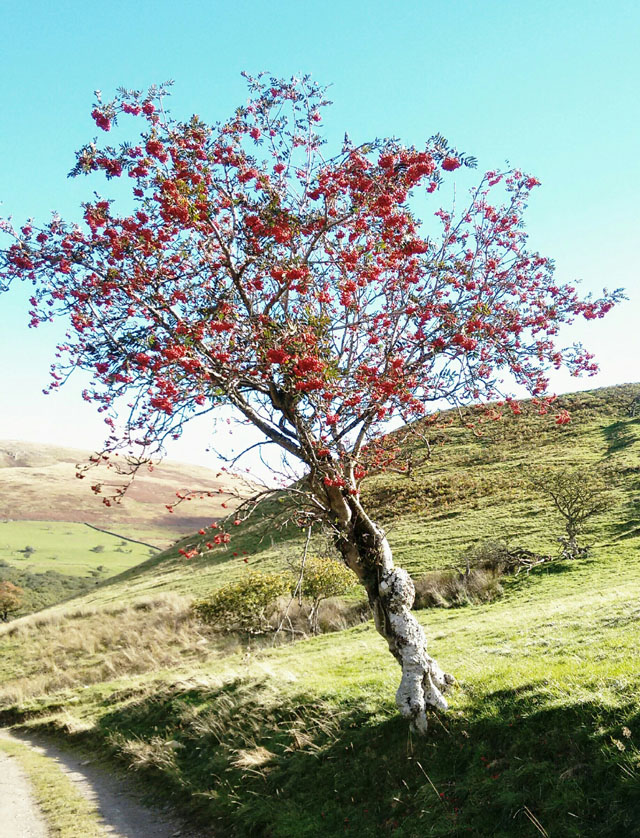 cumbria tree fruit birds fells moors