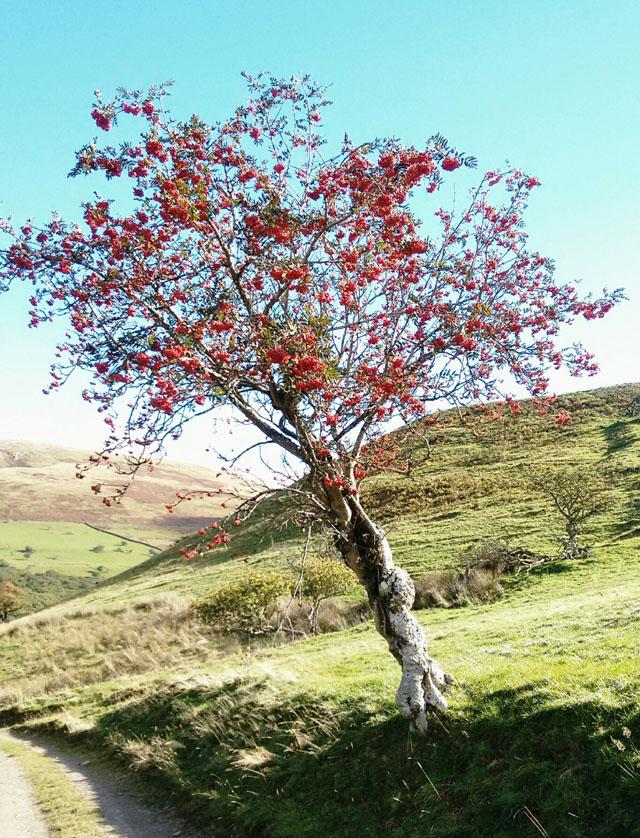 cumbria tree fruit birds fells moors