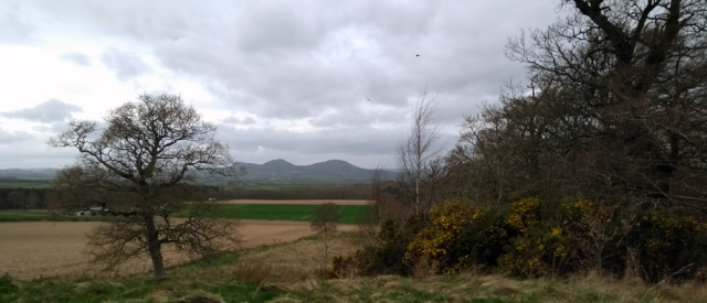 eildon-hills-scottish-national-trail