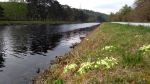 Along the Caledonian canal on the Great Glen way, Scotland