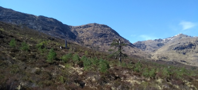 forest restoration in the scottish highlands