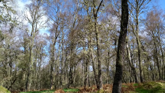 woods-above-aberfeldy