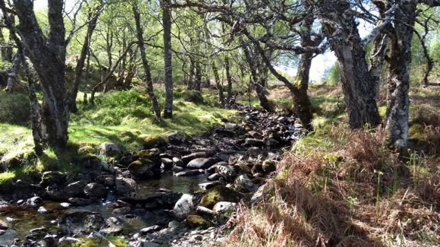 scotland highland stream at Kinlochewe