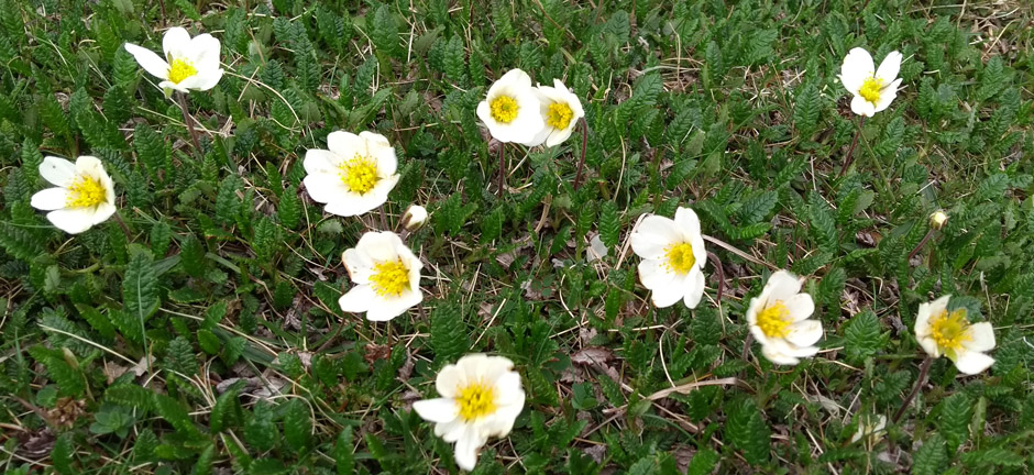 wild flowers of scottish highlands