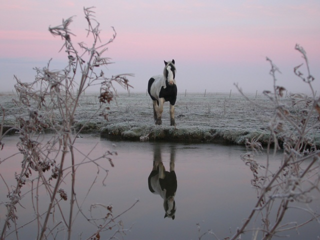 salthouse norfolk england horse and river in winter