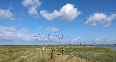 breydon-water-birds-england