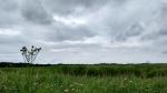 hickling nature reserve norfolk broads england