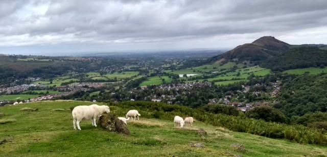 hills in shropshire england with sheep