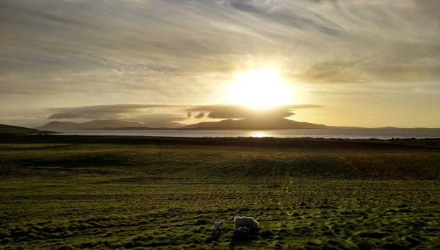 berneray-outer-hebrides-sheep