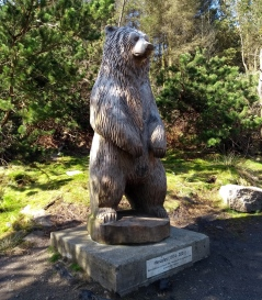 hercules-bear-north-uist-hebrides
