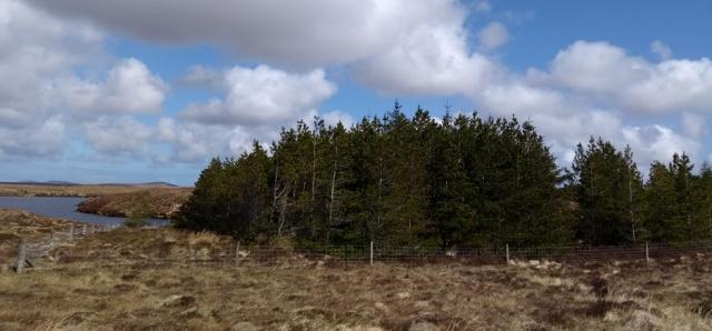 lewis-forestry-hebrides