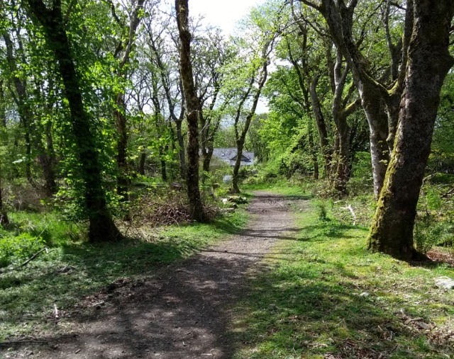 stornoway-wood-path
