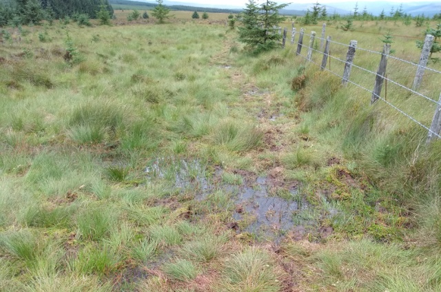 pennine way bogs at brownrigg head