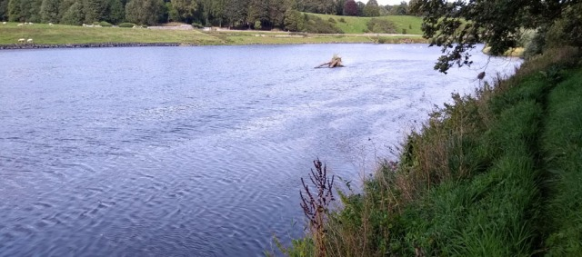 river-tweed-bank-path-northumberland