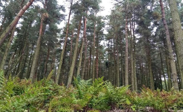 scottish-national-trail-ferny-forest