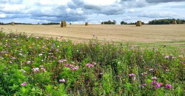 wild-flower-meadow-northumberland
