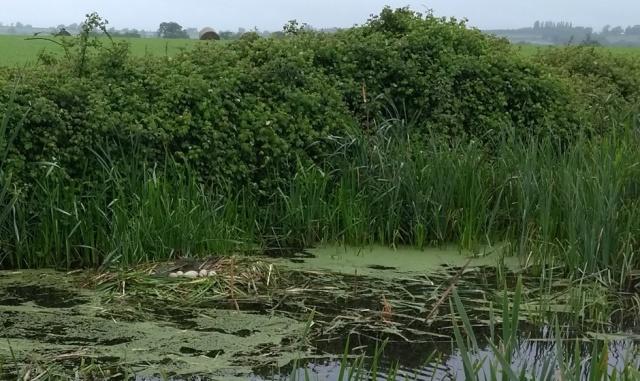 c2c-canal-swans-nest
