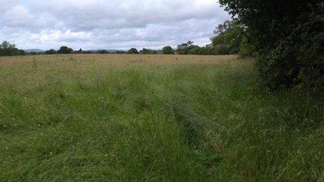 c2c-graasy-path-shropshire