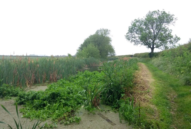 c2c-grantham-canal-wild-bit