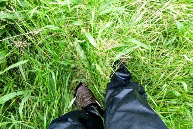 c2c-grassy-footpath-shropshire
