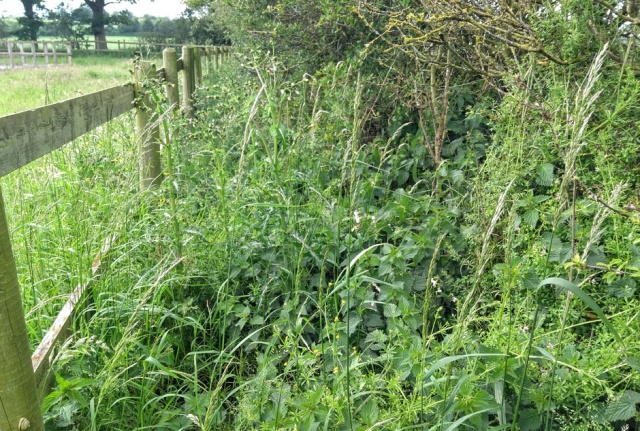 c2c-shropshire-hedge-path-overgrown