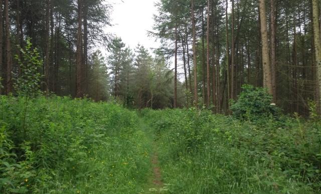 c2c-shropshire-wood