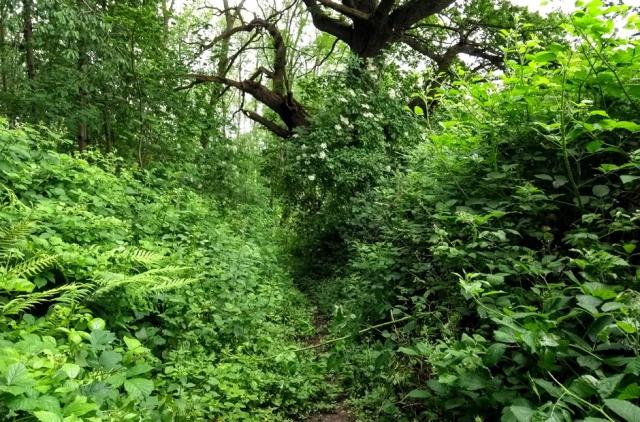 c2c-shropshire-woody-footpath