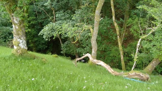 c2c-llanrwst-wood