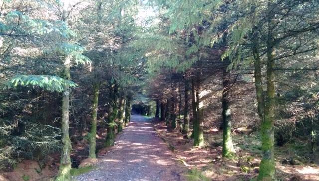 c2c-pine-avenue-lyn-alwen