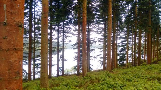 c2c-pines-alwen